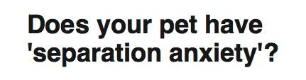 ペットにも分離不安があるのか?