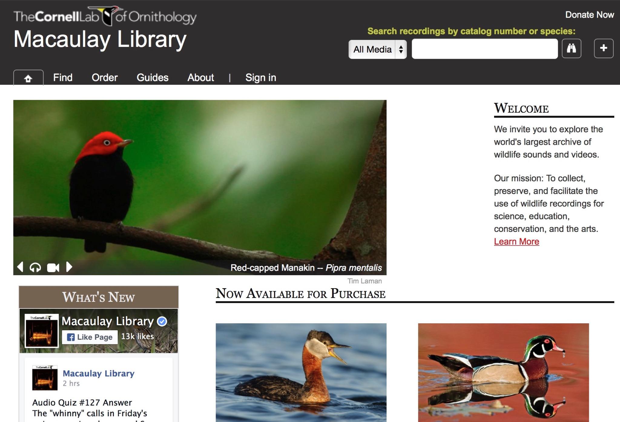 鳥、クジラ、象、カエル、霊長類などの鳴き声が楽しめるサウンド・アーカイブ