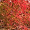 紅葉の人気スポット・Top Autumn Leaf Viewing Spots in Japan