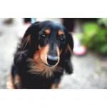 日本のペット犬が減っているのはなぜ?